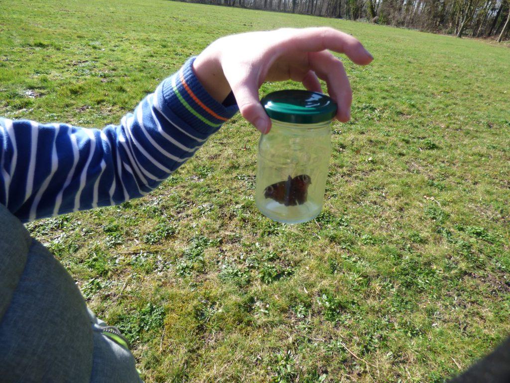 ontdek de lente - insecten potje